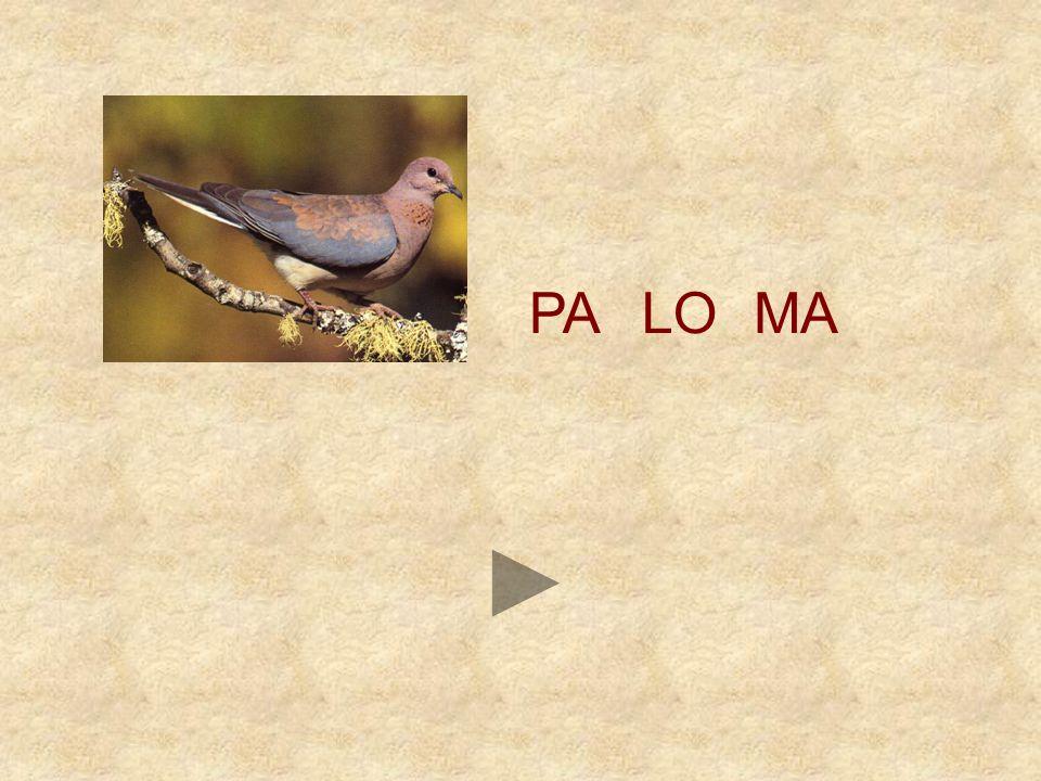 PA LO MA