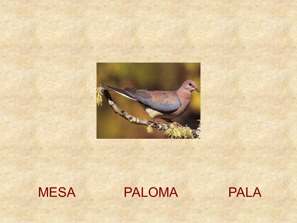 MESA PALOMA PALA
