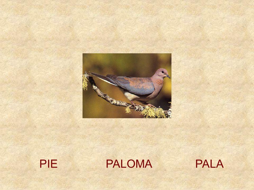 PIE PALOMA PALA