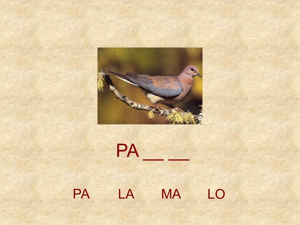 PA __ __ PA LA MA LO