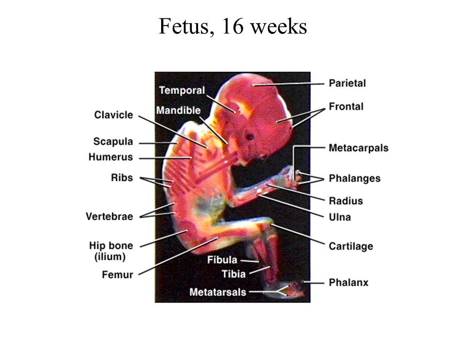 The Skeletal System Chapter Ppt Download