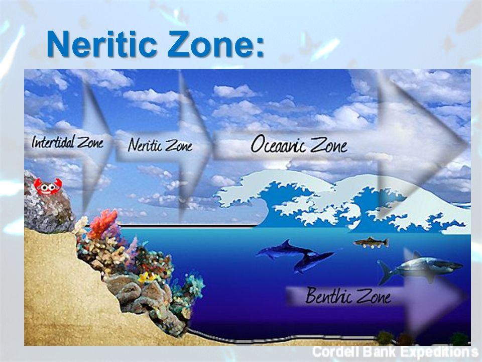 neritic zone In the big picture view, the greatest difference occurs between neritic and oceanic environments the neritic zone is the coastal zone or area closest to land.
