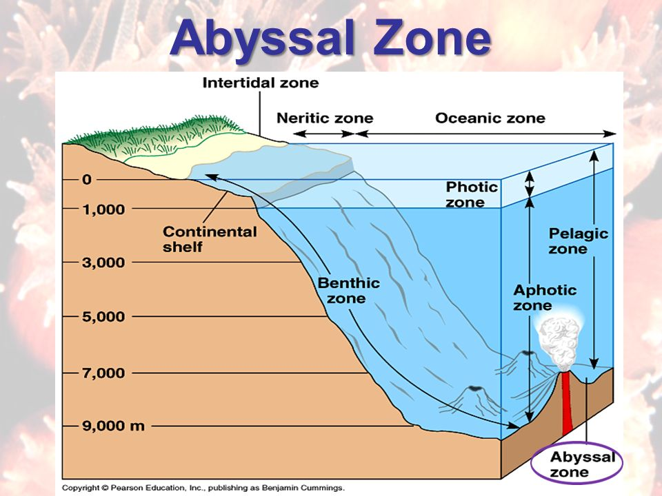 abyssal zone The abyssal zone, also known as the abyssopelagic zone or simply, the abyss―derived from the greek word, meaning bottomless―is the part of the ocean which is typically characterized by uniform darkness, low temperature (around 3.