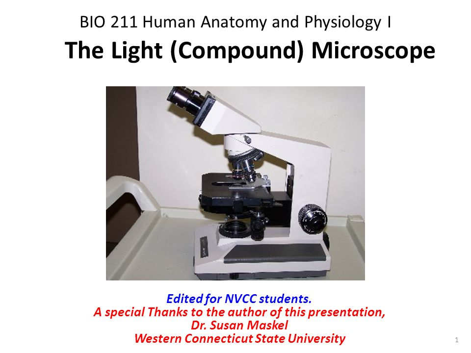 Bio 211 Human Anatomy And Physiology I Ppt Video Online Download