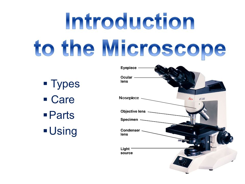 "introduction to the microscope 1839 schwann theorizes all animals are made up of cells 1855 virchow theorizes all cells are ""born"" from other cells cell theory completed."