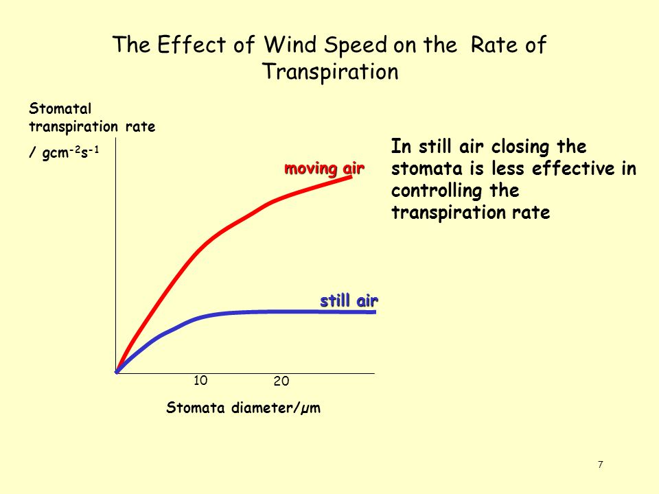 effect of temperature on the rate of transpiration Environmental factors that affect the rate of transpiration light:stomata are triggered to open in light so plants transpire more rapidly in the presence of light than in the dark temperature: plants transpire more rapidly at higher temperatures because water evaporates more rapidly as the temperature rises.
