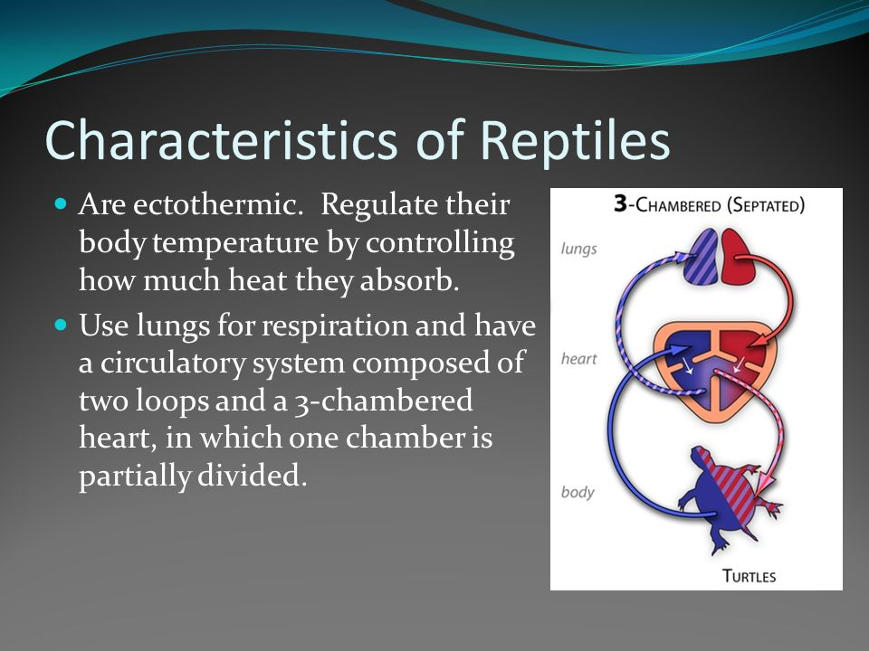 the characteristics of reptiles and its species The reptile species assemblage of the soutpansberg (limpopo province, south africa) and its characteristics sebastian kirchhof1, michael kr mer2, jabu linden3 & klaus richter4 1) the soutpansberg situated in north-eastern south africa was investigated with respect to its reptile species di.
