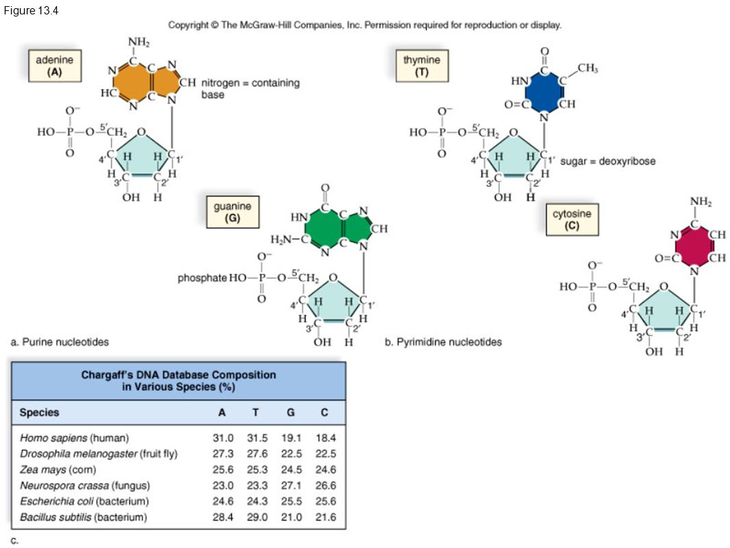 handout for ap bio Page lists activities and worksheets related to a unit on genetics and heredity, designed for high school level biology , worksheets are printable.