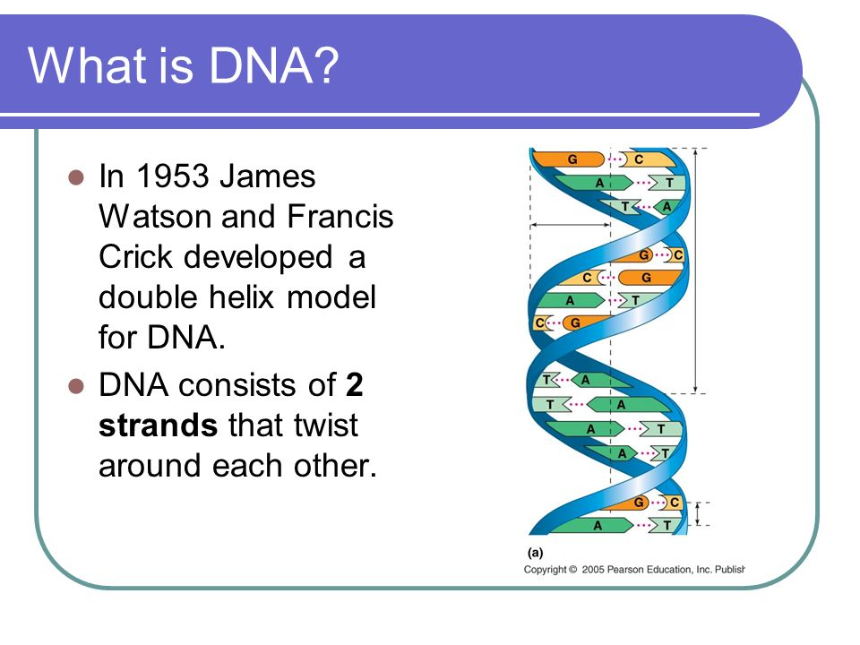 DNA Structure. - ppt video online download