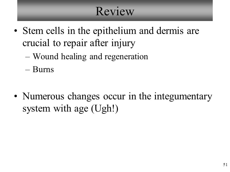 martini visual anatomy and physiology pdf