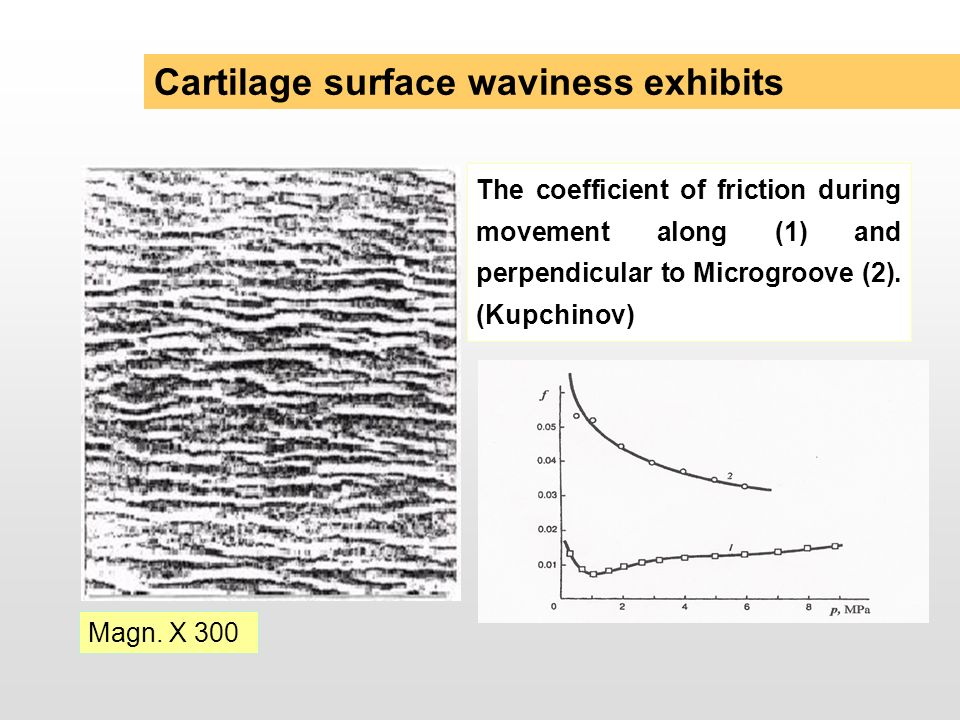 Cartilage surface waviness exhibits