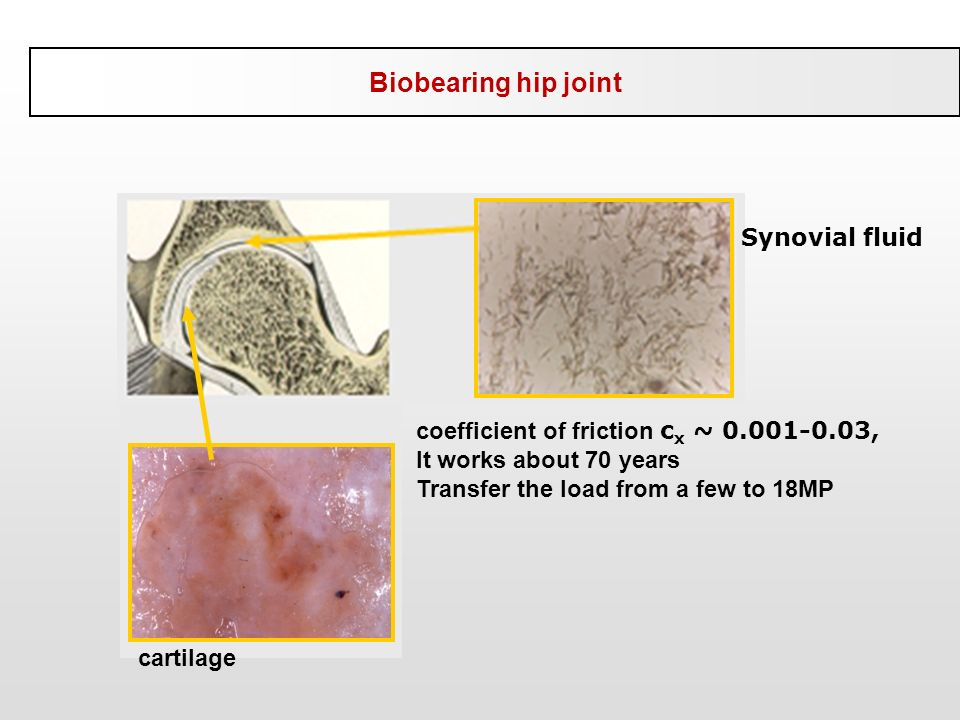Biobearing hip joint Synovial fluid