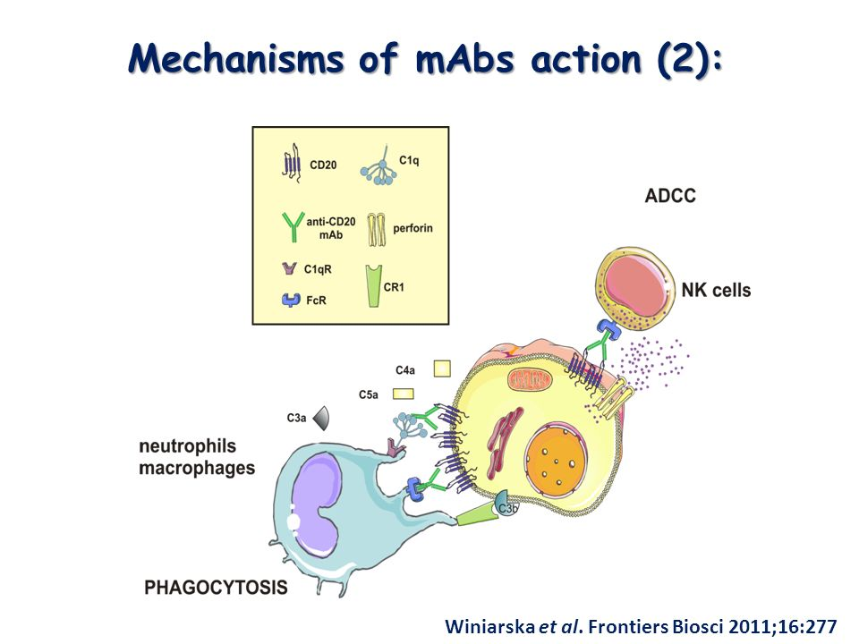 Mechanisms of mAbs action (2):
