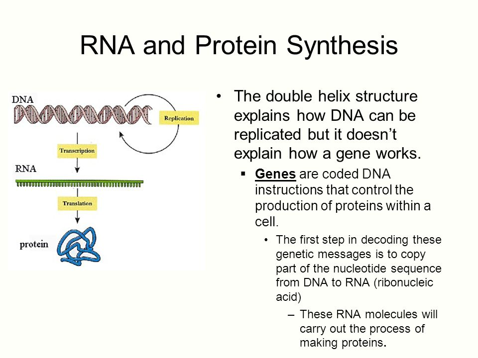 describe the relationship between dna and protein synthesis