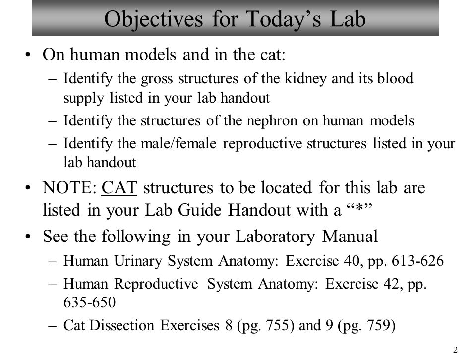 Exercise 42 anatomy of the reproductive system