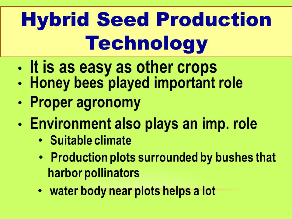How Corn Hybrids are Developed