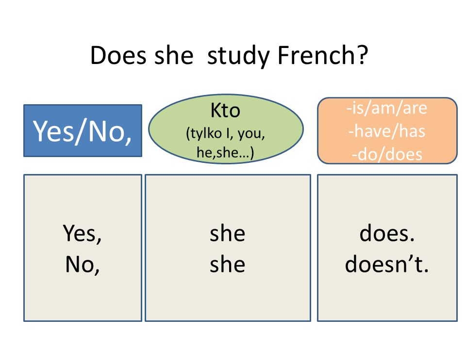 Yes/No, Does she study French Yes, No, she does. doesn't. Kto