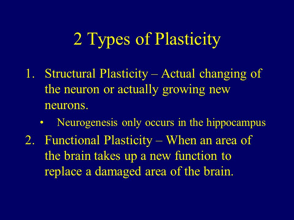 brain plasticity News by jasonmaddox on july 29th, 2005 what is brain plasticity brain plasticity is one of the hottest topics in neuroscience research the brain's regenerative and flexible capacities are only now being observed and understood, but the field is expected to yield monumental findings in the future.