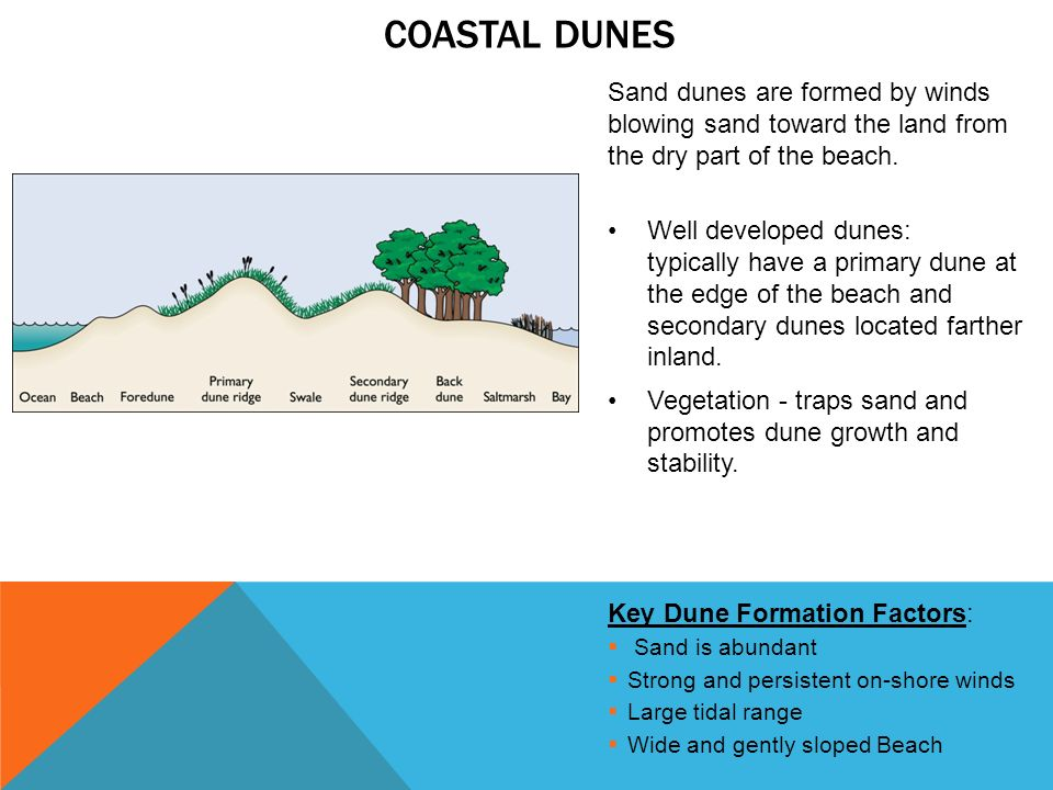 Diagram Of Dune Formation 25 Wiring Diagram Images