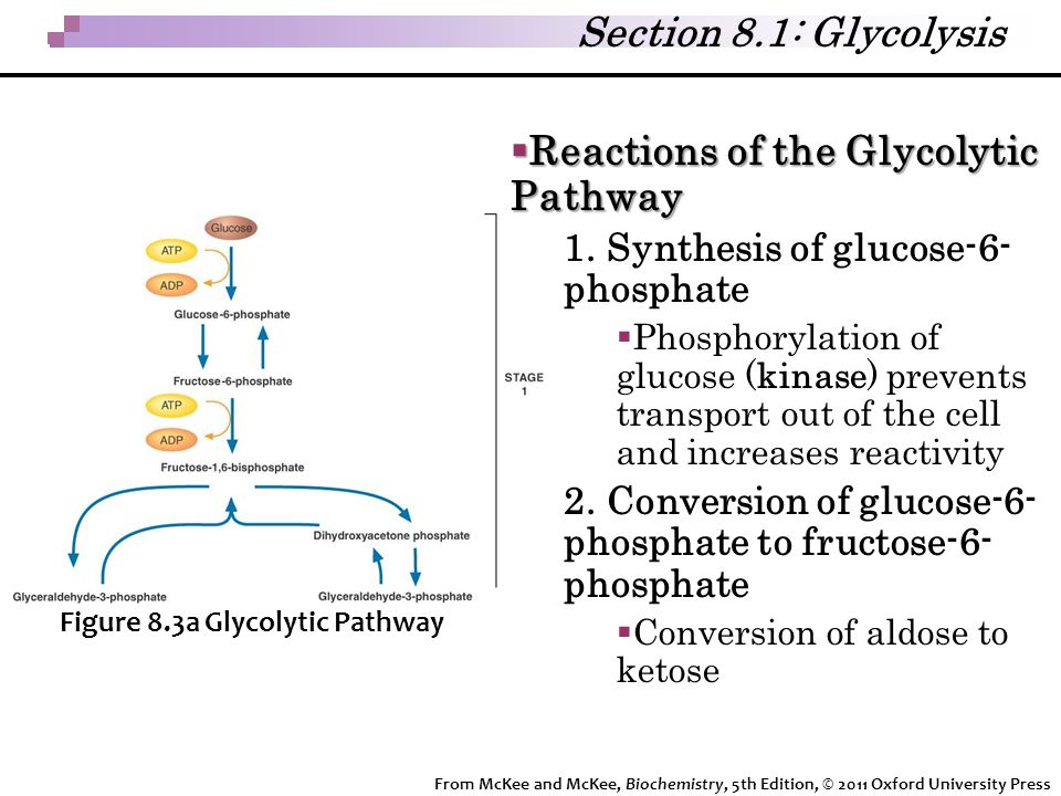 Reactions of the Glycolytic Pathway