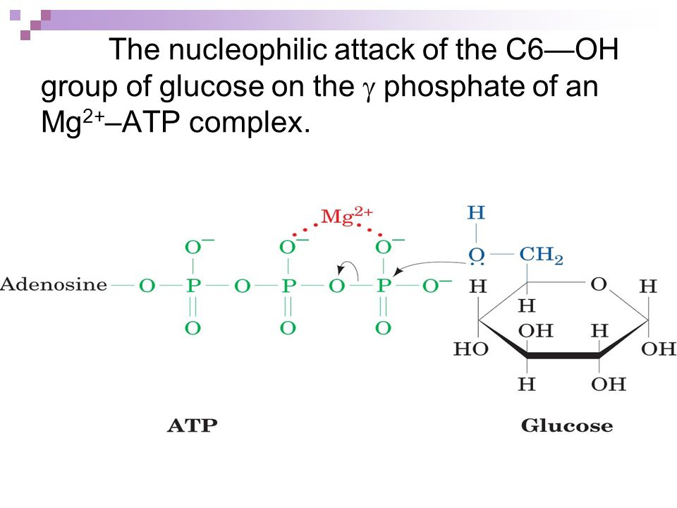 The nucleophilic attack of the C6—OH group of glucose on the g phosphate of an Mg2+–ATP complex.