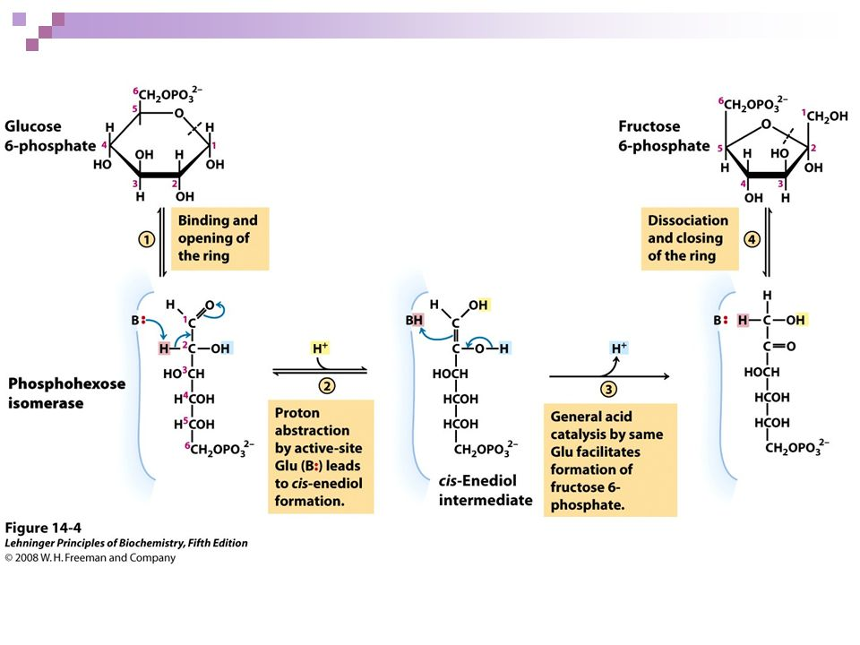 FIGURE 14-4 The phosphohexose isomerase reaction