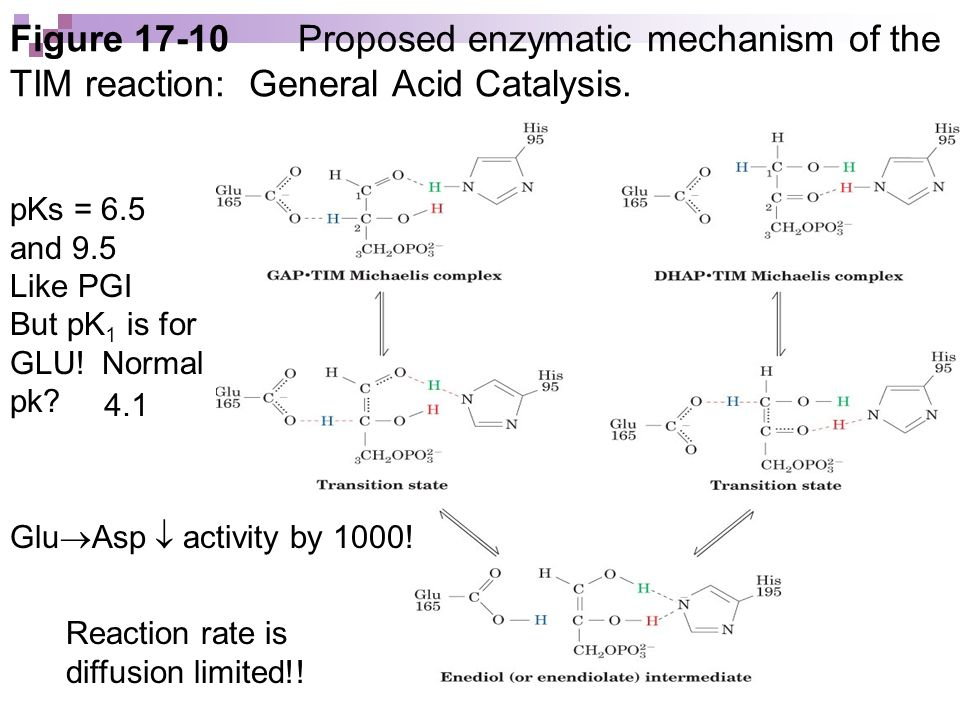 Figure Proposed enzymatic mechanism of the TIM reaction: General Acid Catalysis.