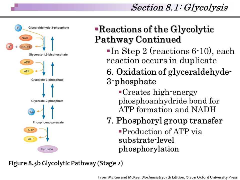 Reactions of the Glycolytic Pathway Continued