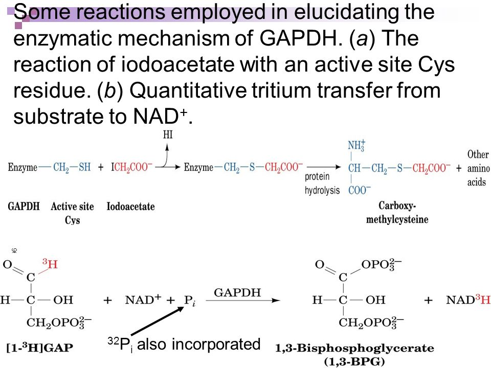 Some reactions employed in elucidating the enzymatic mechanism of GAPDH. (a) The reaction of iodoacetate with an active site Cys residue. (b) Quantitative tritium transfer from substrate to NAD+.
