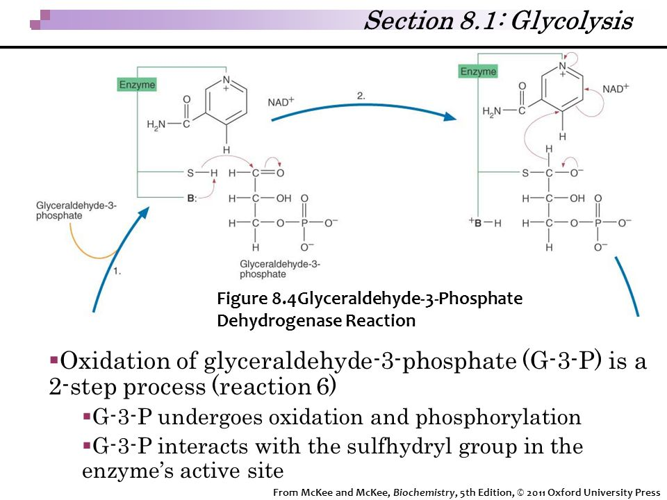 Section 8.1: Glycolysis Figure 8.4Glyceraldehyde-3-Phosphate Dehydrogenase Reaction.
