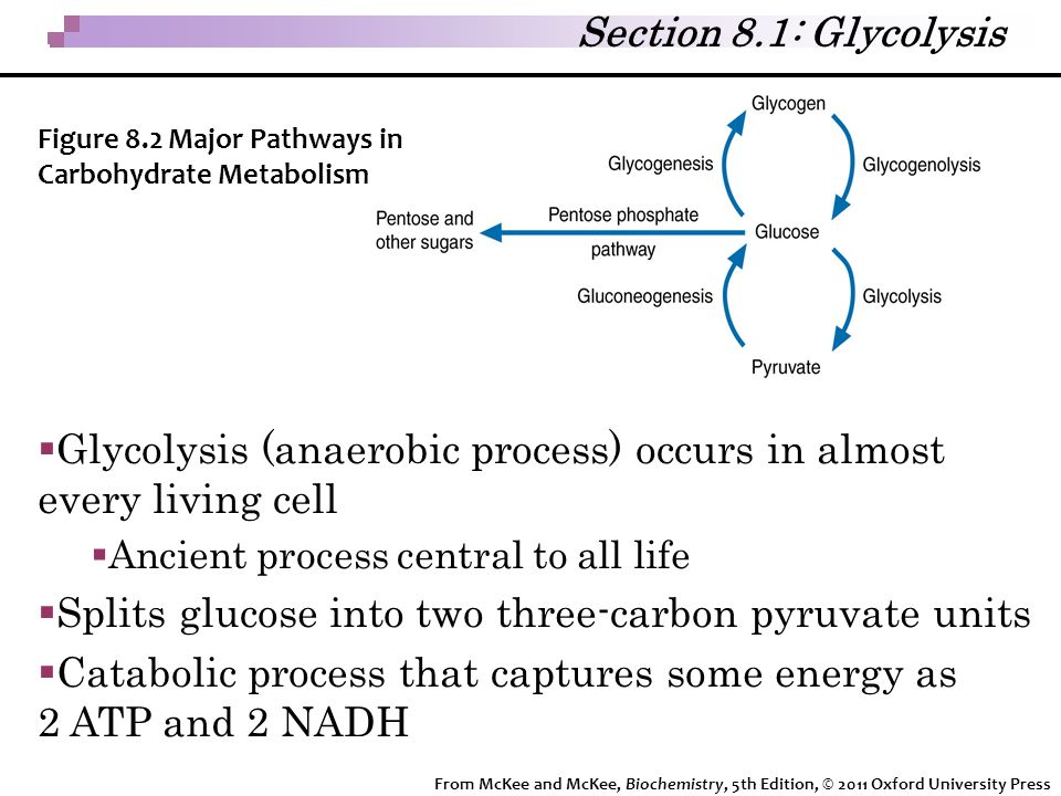 Glycolysis (anaerobic process) occurs in almost every living cell