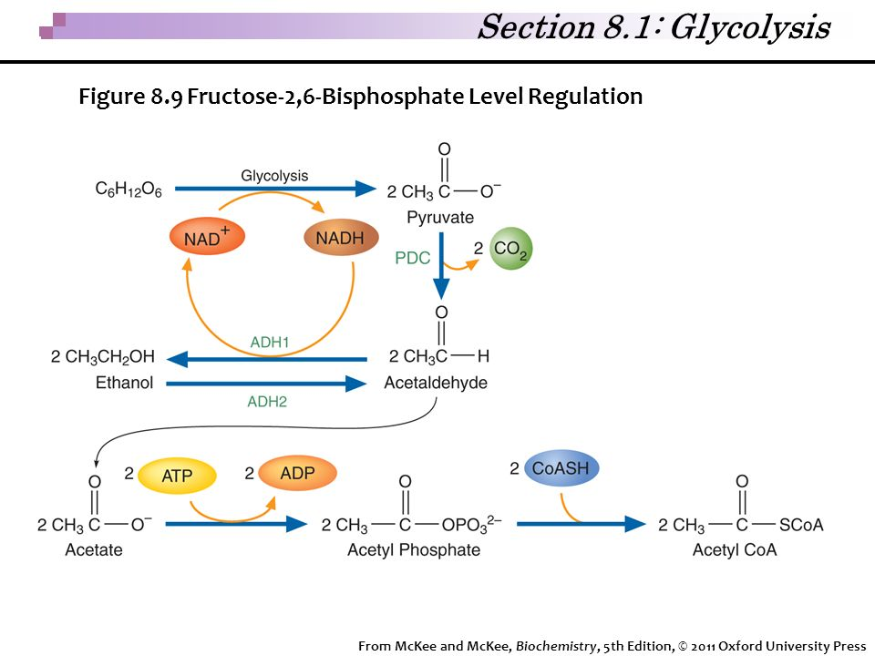 Section 8.1: Glycolysis Figure 8.9 Fructose-2,6-Bisphosphate Level Regulation.