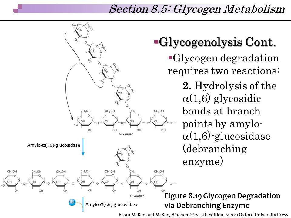 Glycogenolysis Cont. Section 8.5: Glycogen Metabolism