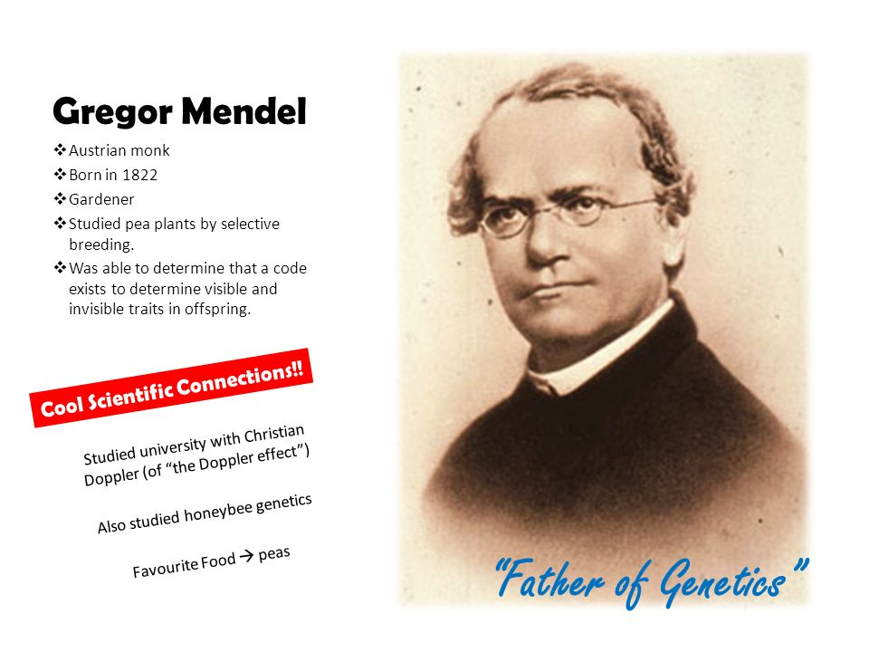 """the scientific work of gregor mendel the father of genetics """"the father of genetics"""" gregor  1884 my scientific labors have brought  father of genetics"""" johann mendel education early work pea experiment."""