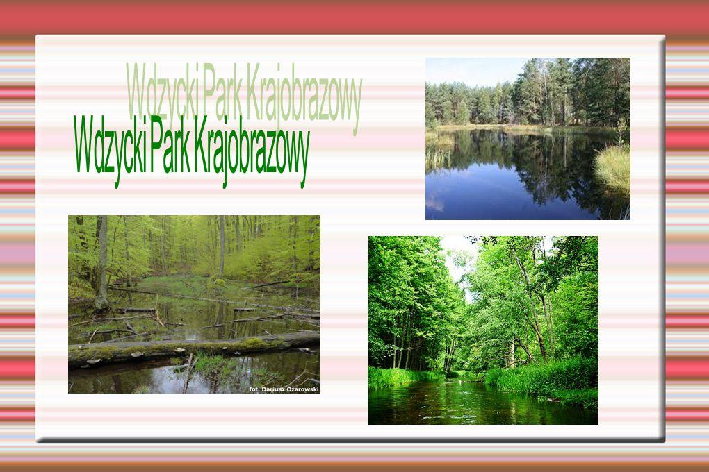 Wdzycki Park Krajobrazowy