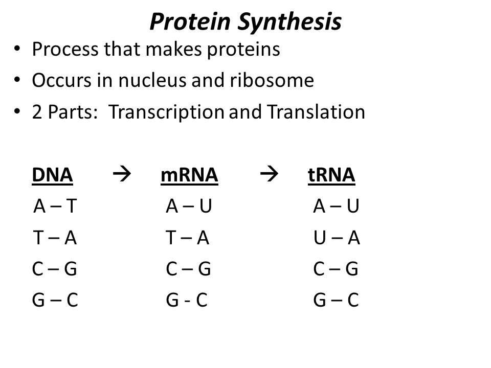 Protein synthesis problems