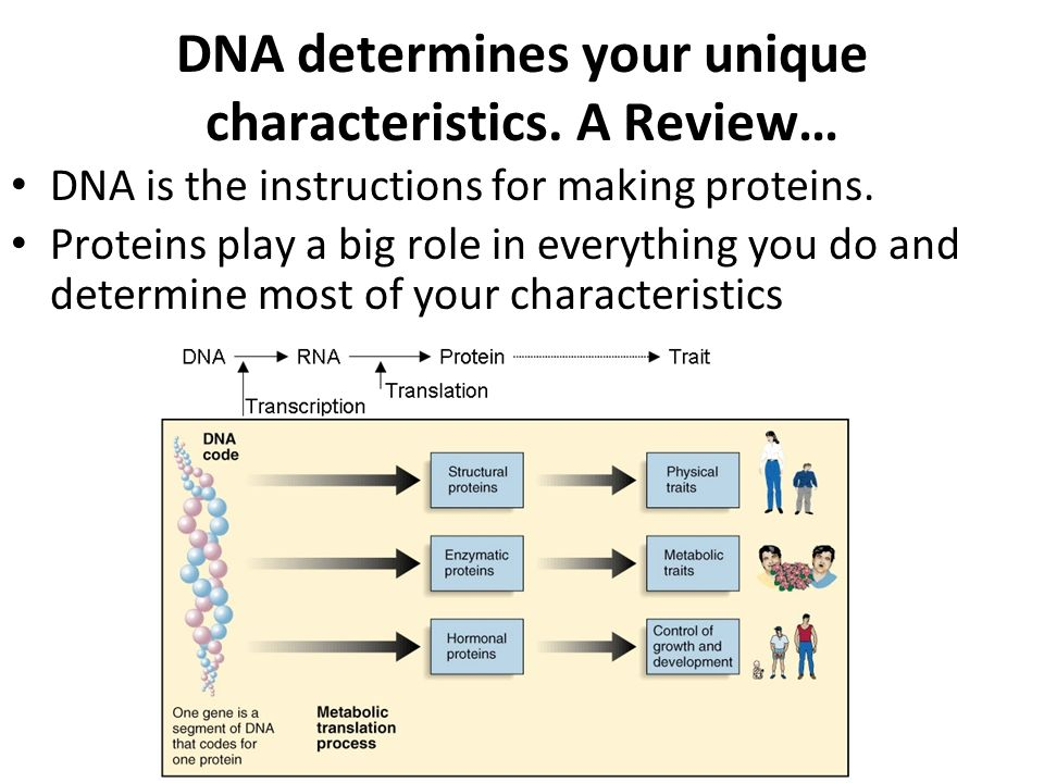 3 exit slip Protein Synthesis 63 HW finish worksheet Quiz ppt – From Dna to Protein Worksheet