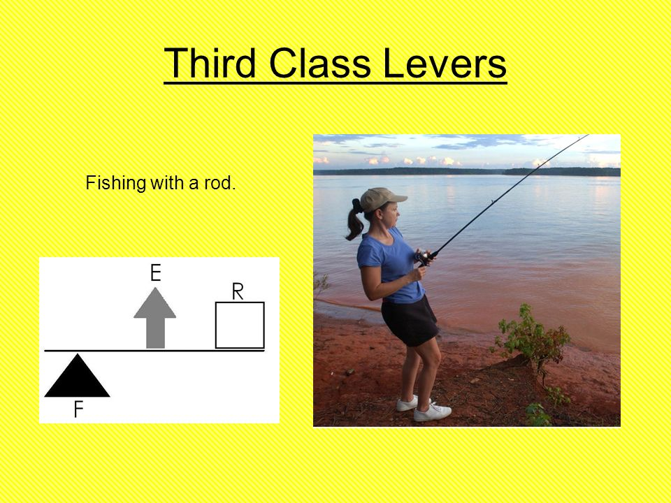 BVG8Science - Tamara\'s page on 3rd class levers Third Class Lever ...