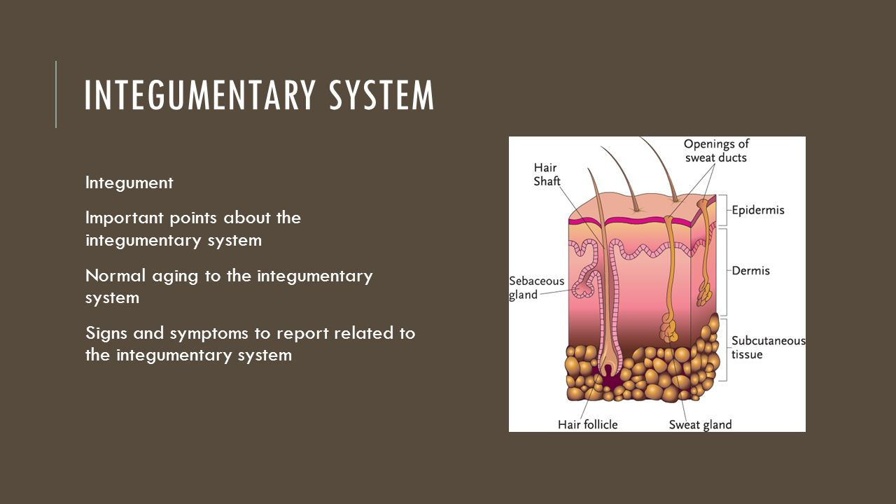 the integumentary system chapter 7 review sheet