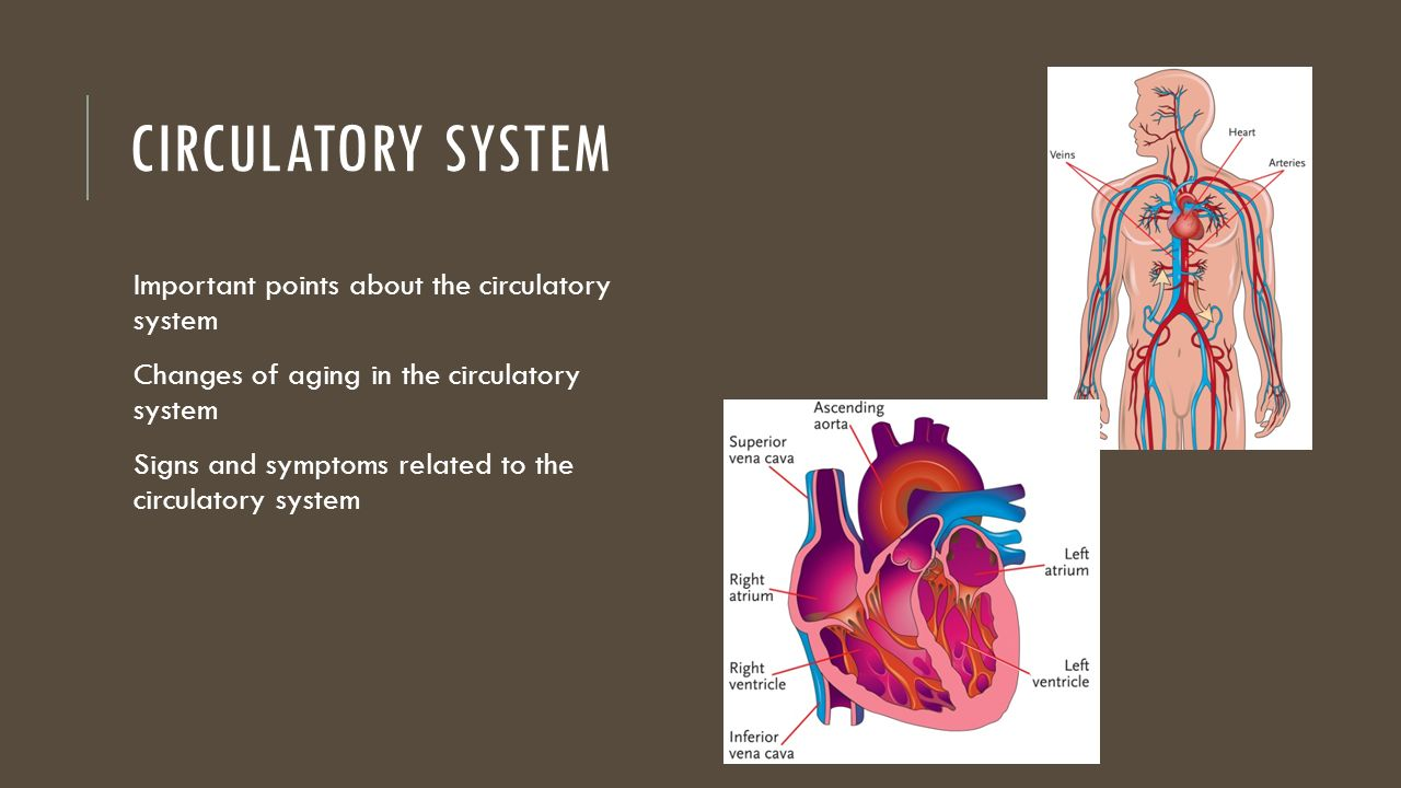 Circulatory And Respiratory System Quiz