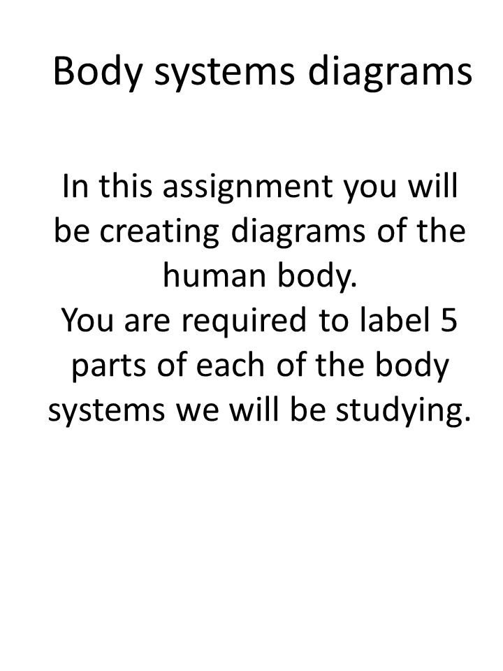 Body Systems Diagrams In This Assignment You Will Be Creating