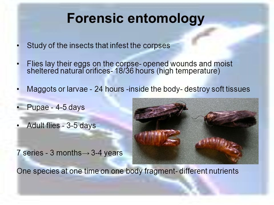 a study of insects and their subclasses Forensic entomology is the study of insects/arthropods in criminal investigation right from the early stages insects are attracted to the decomposing body and may lay eggs in it by studying the insect population and the developing larval stages, forensic scientists can estimate the postmortem.