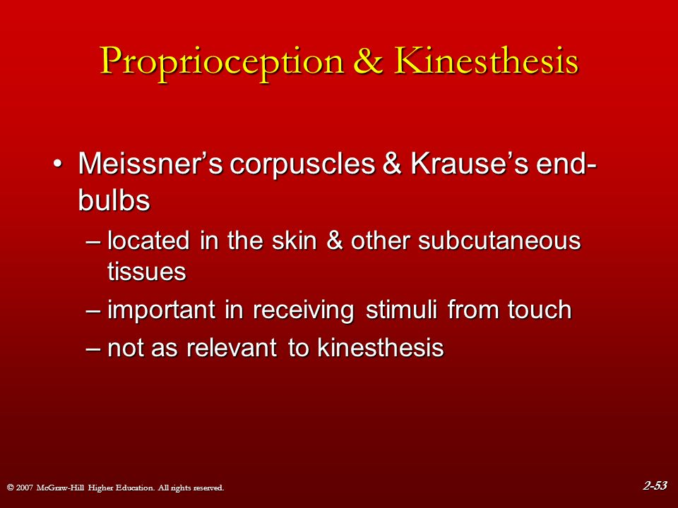 for kinesthesis are located Sensory pathways s ensory pathways  located between the tip of the posterior horn and  of the trigeminal nerve into the principal sensory nucleus of v, located.