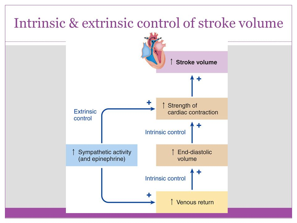 relationship between end diastolic volume and stroke formula