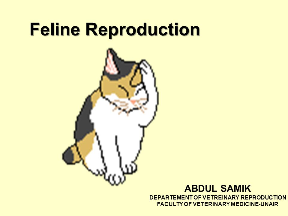 Feline Reproduction ABDUL SAMIK DEPARTEMENT OF VETREINARY ...