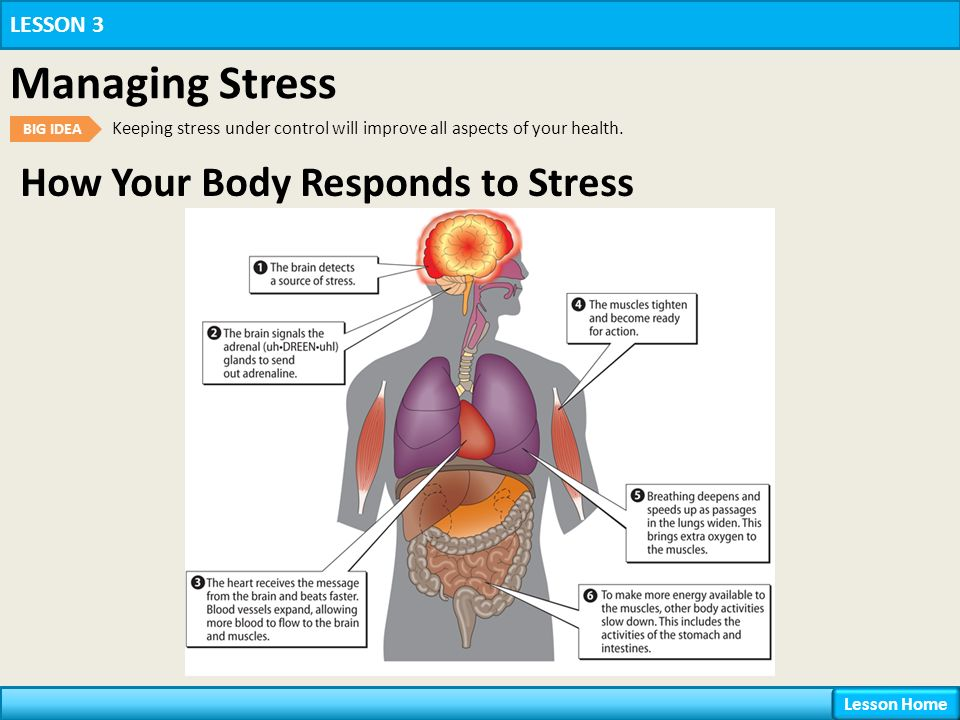 describe how the body responds to A secondary school revision resource for ocr gcse additional science about homeostasis and maintaining body temperature.