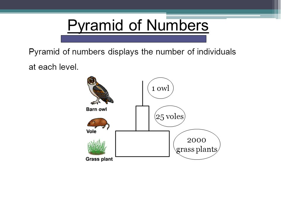 how to solve number pyramids