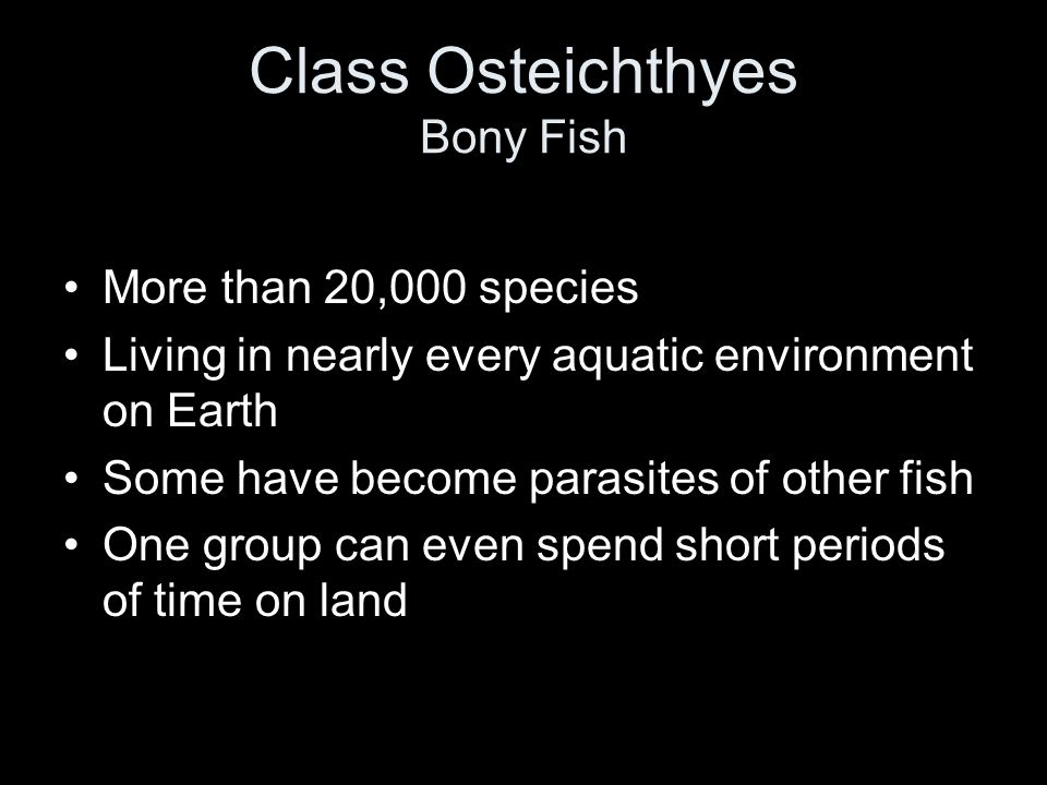 classes agnatha chondrichthyes and osteichthyes ppt