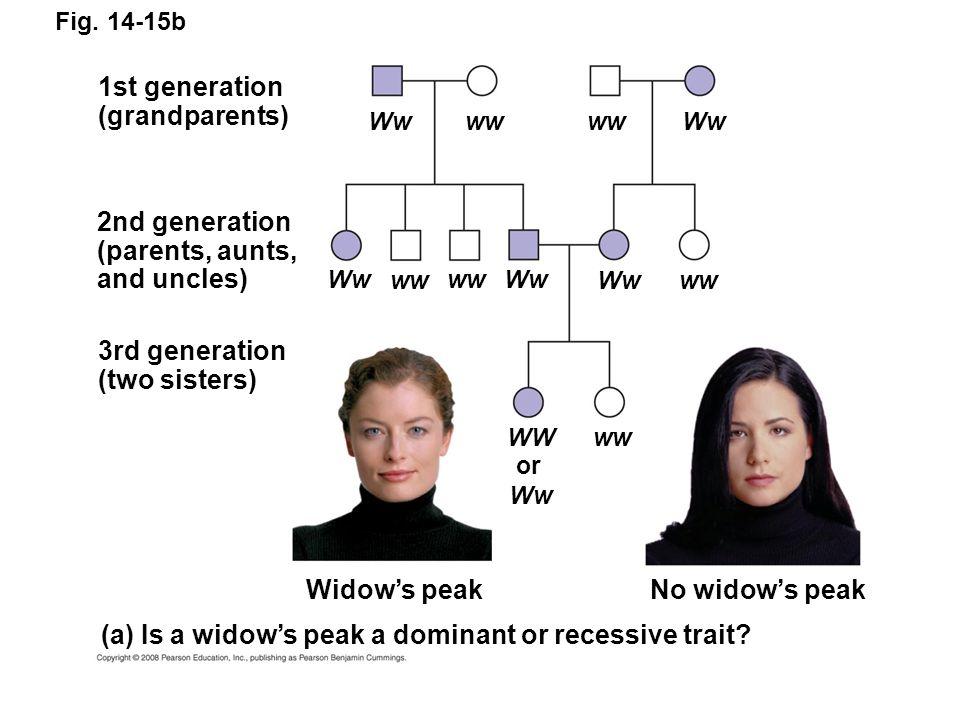 mendelian genetics in humans essay