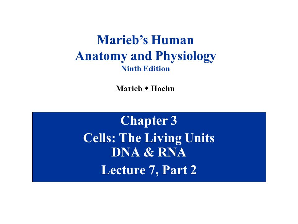 Chapter 3 Cells: The Living Units DNA & RNA Lecture 7, Part 2 - ppt ...
